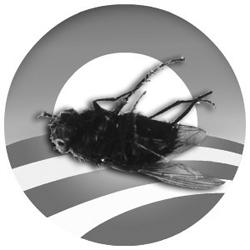 Obama-fly-FINAL