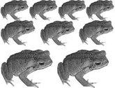 Toads_2